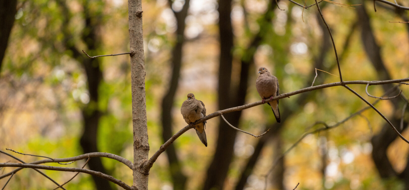 Birds on a branch in the Ramble