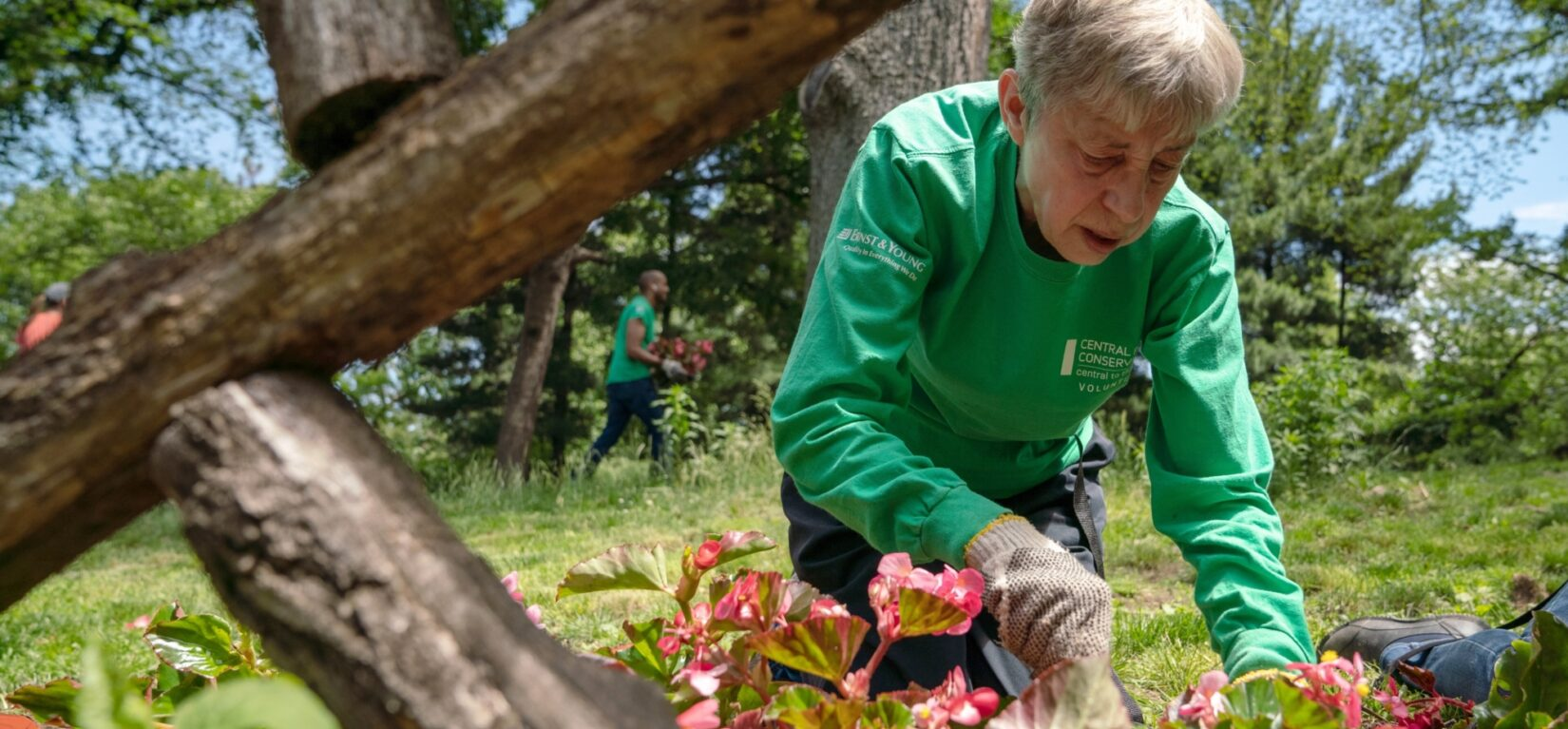 A volunteer at work on a flower bed in the Park