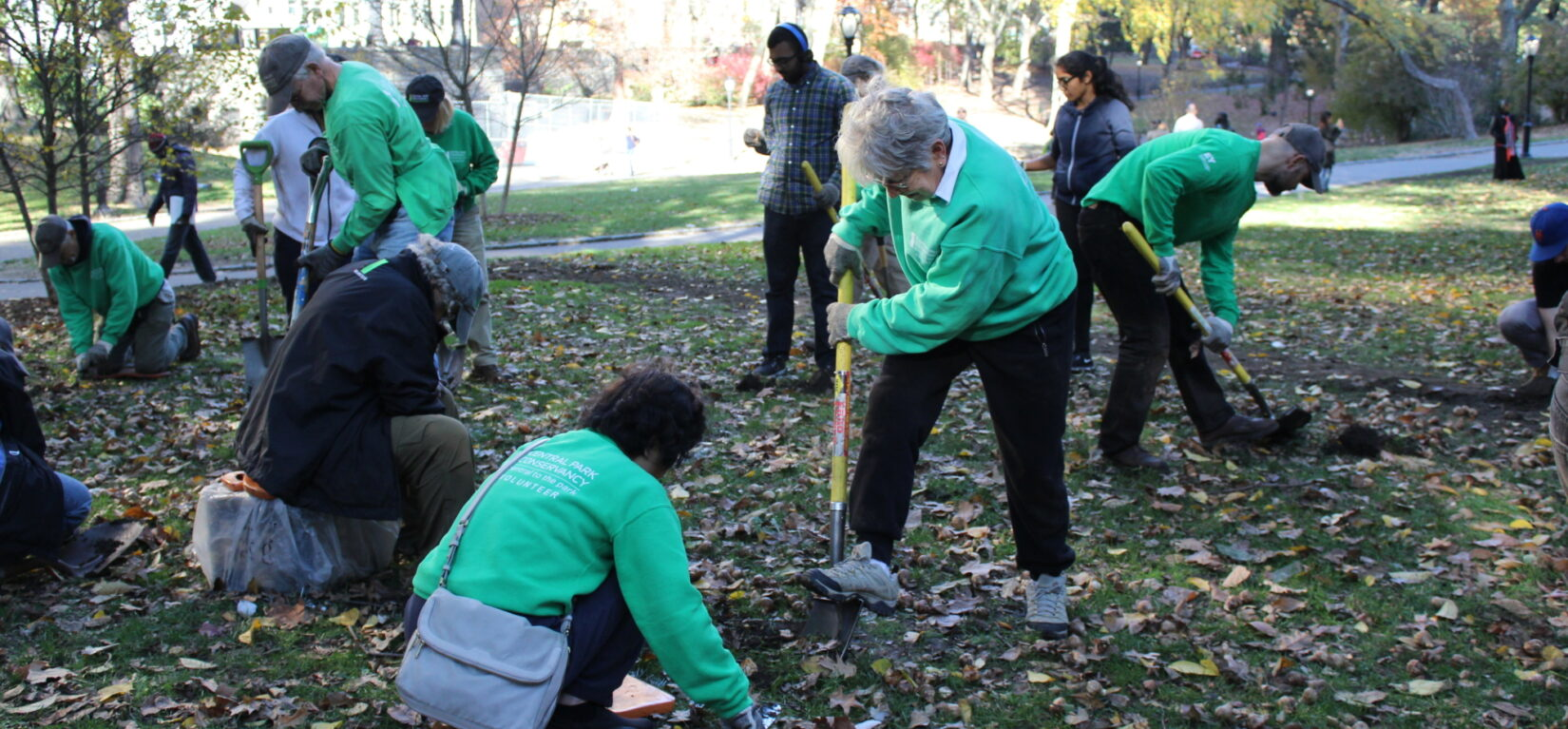 Volunteers digging into a Park landscape in autumn