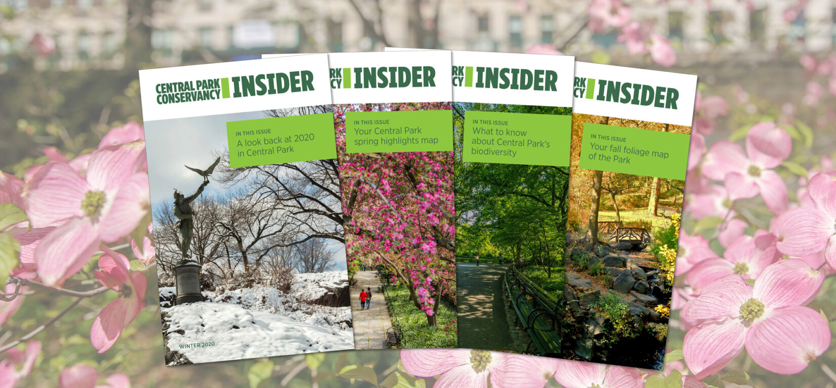 A display of past issues of the Insider, seen against a backdrop of pink flowers.