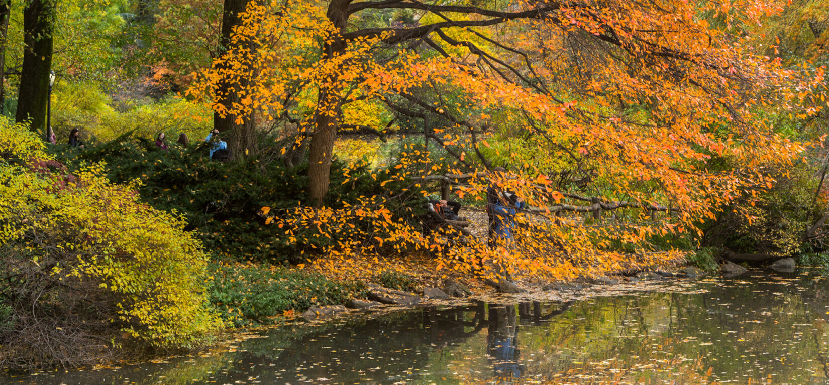 What Are Central Parks Most Colorful Fall Trees
