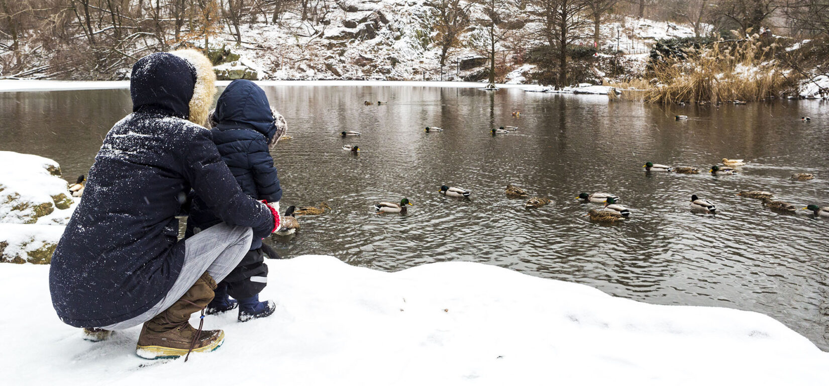 Winter Stories from Central Parks Wildlife