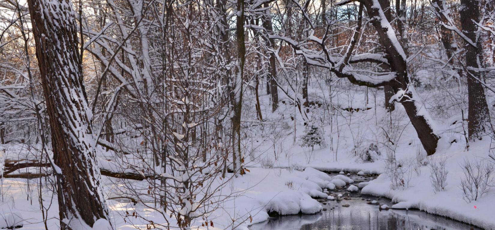 A stream runs through the Ravine, reflecting snow-laden branches