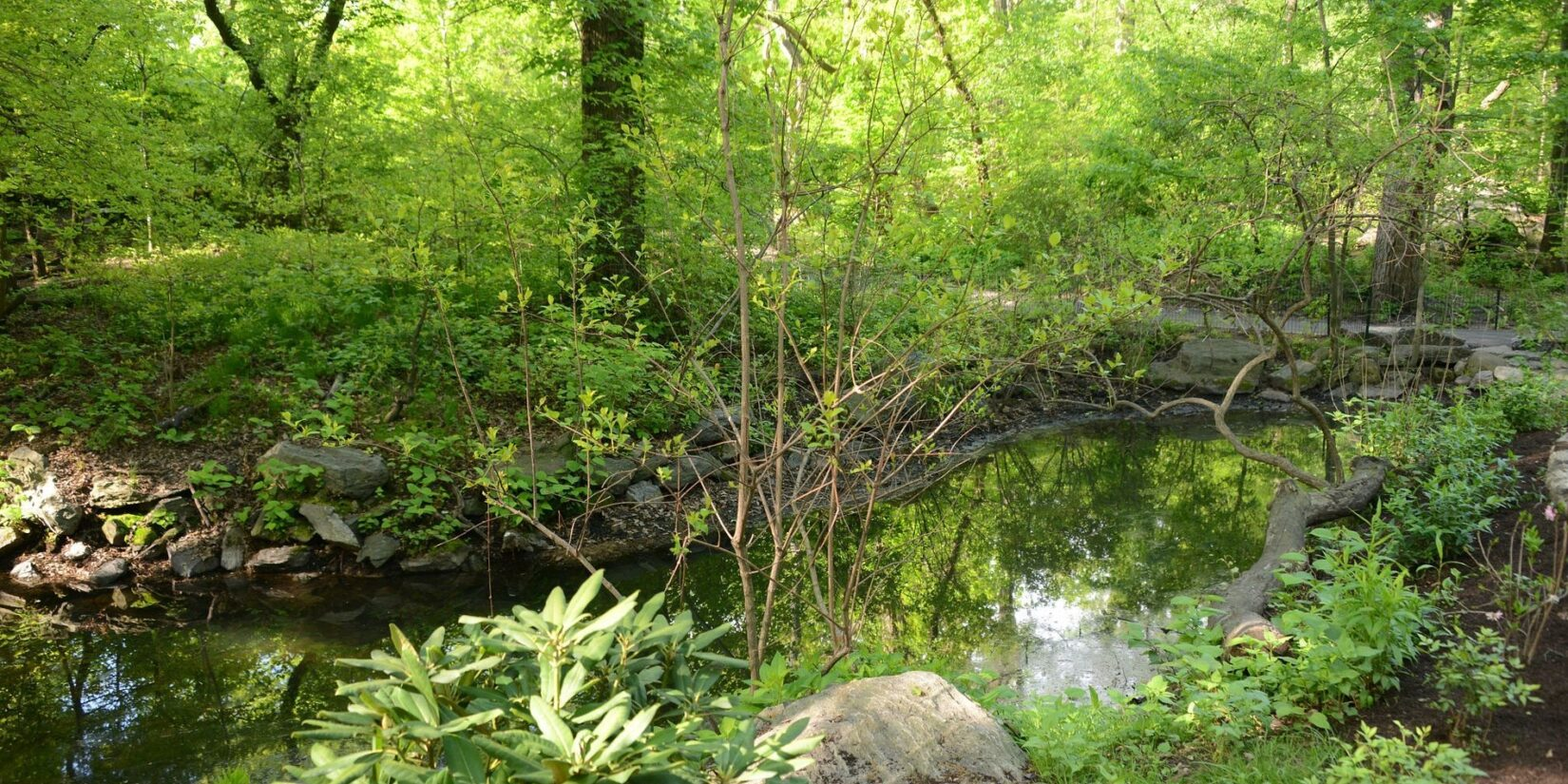 Sunlight streams through the spring-green landscape of the Gill.
