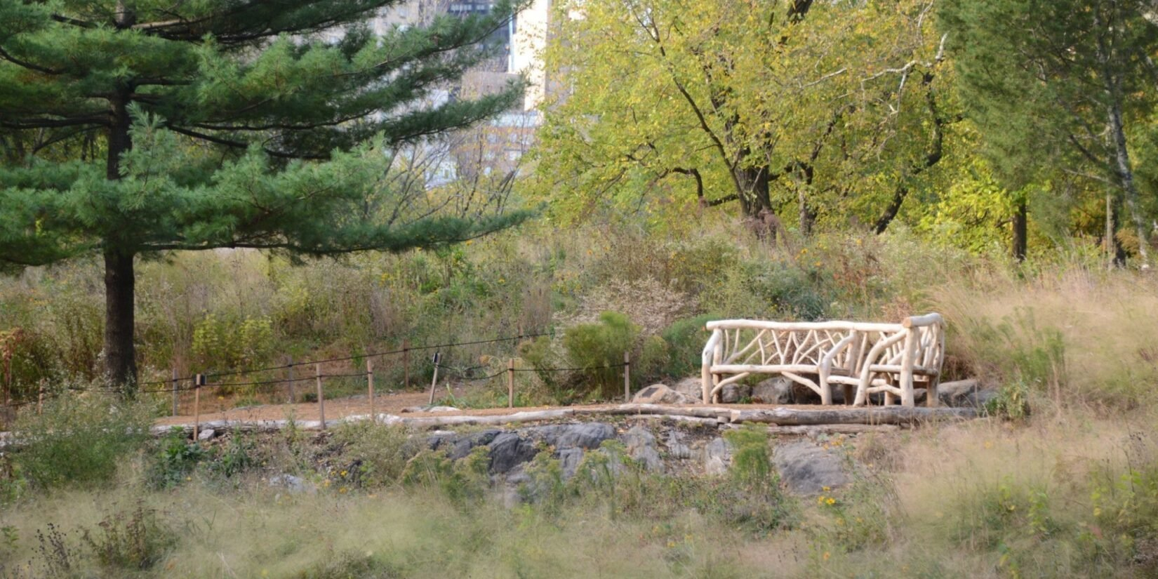 A rustic bench sits in the natural landscape of the Dene.