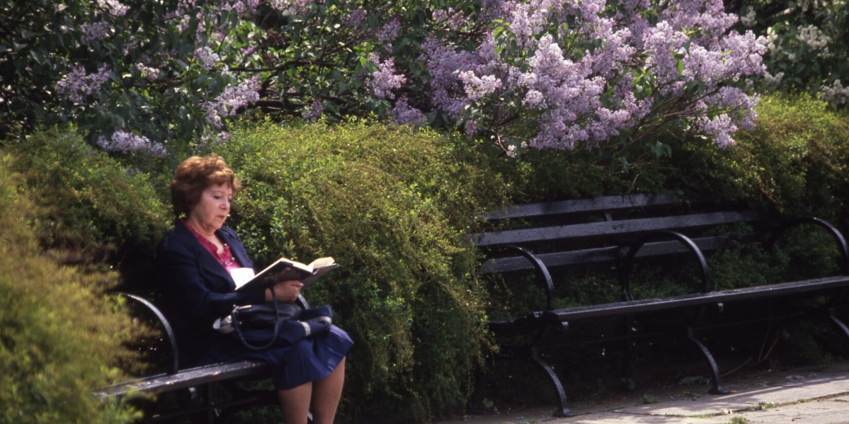 A woman sits alone on a bench in the Garden, reading a book.