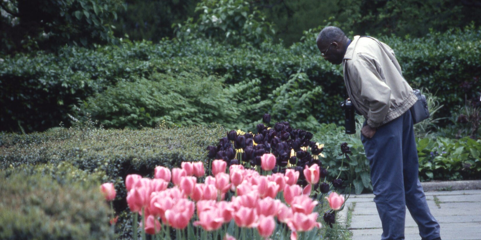A photographer gets a closer look at some deep purple blooms in the Garden