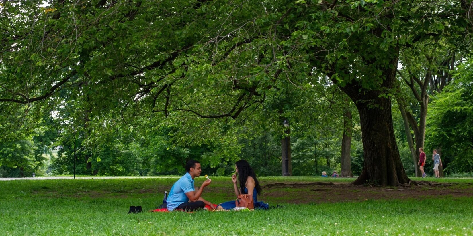 A couple enjoy the broad shade under a Park tree.