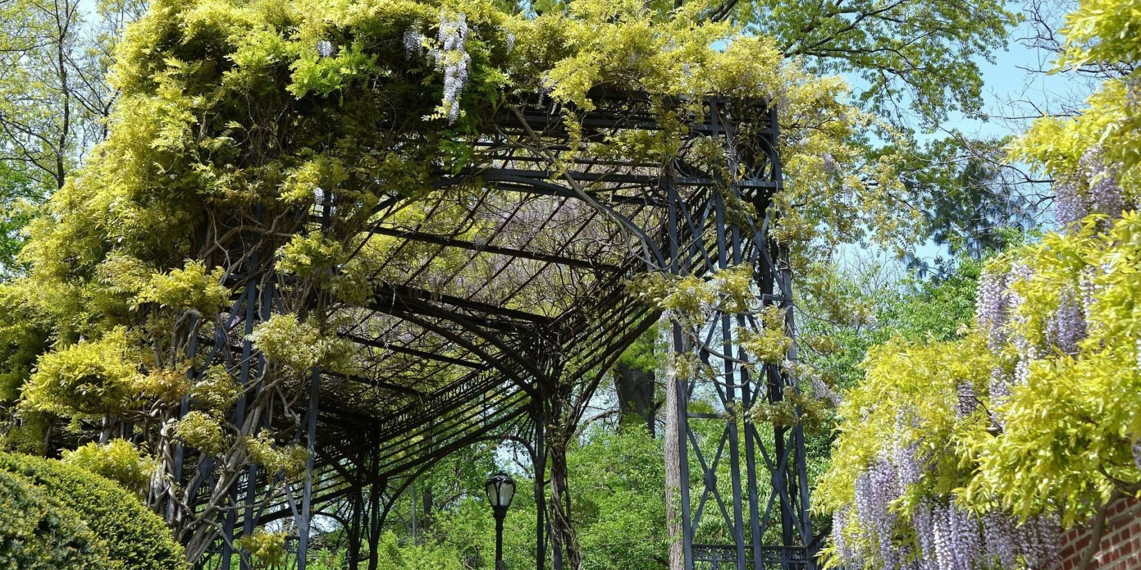 The curve at the end of the pergola festooned with deep greenery.