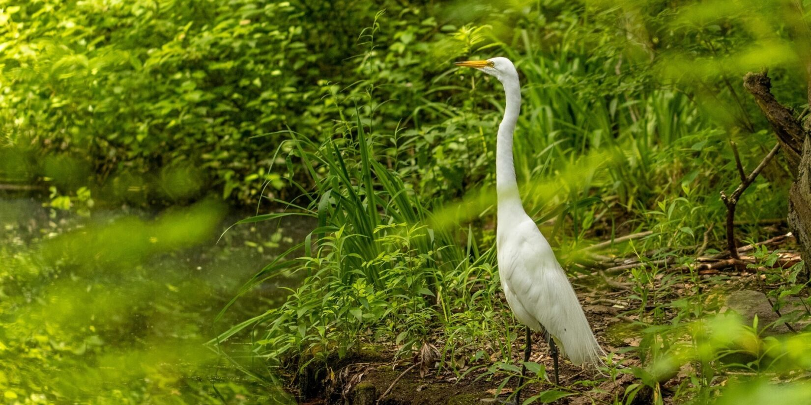 An egret stands on the banks of the Loch, surrounded by the lush green landscape
