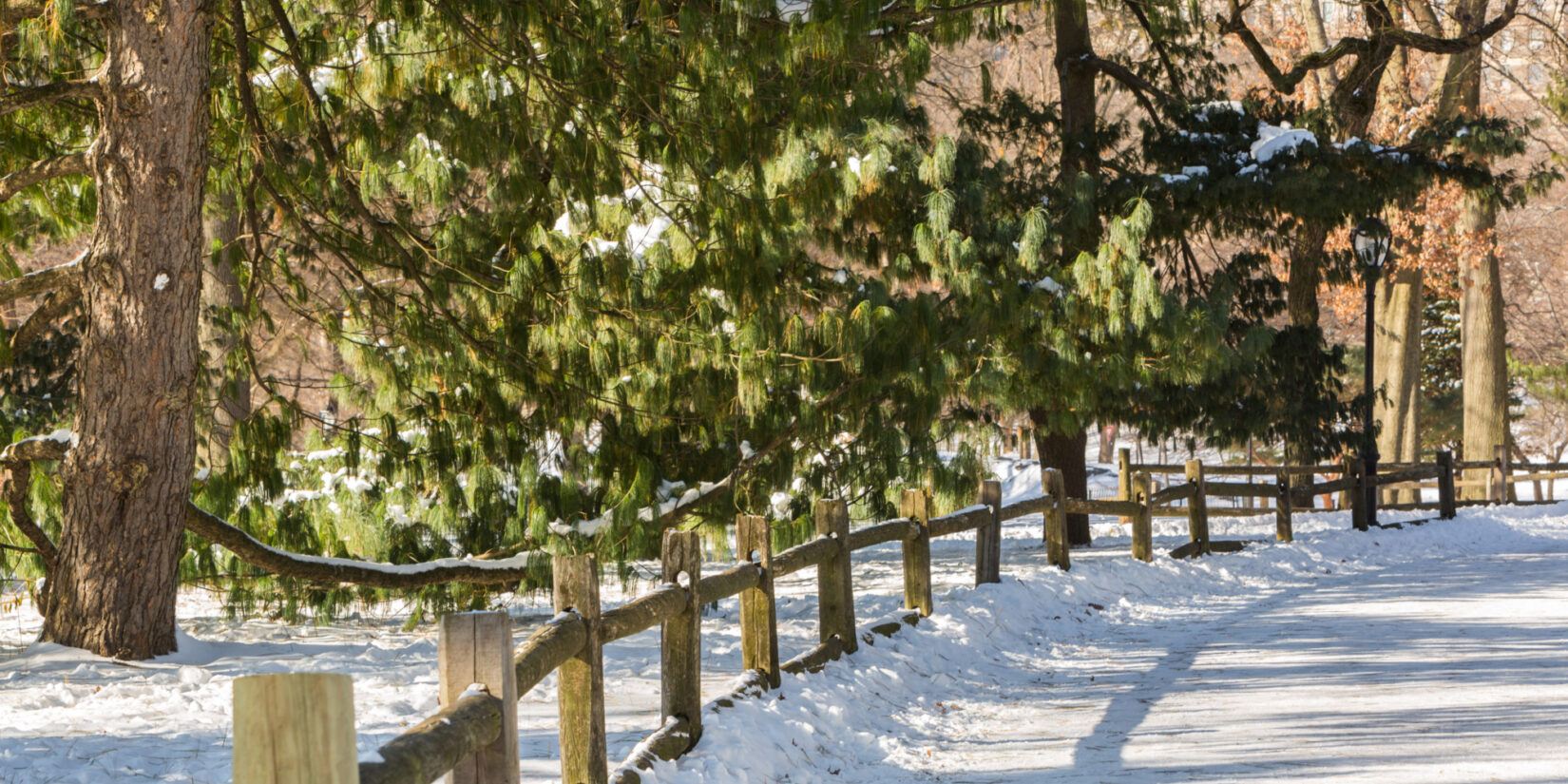 A rustic fence defines the view of the Pinetum under a blanket of snow.