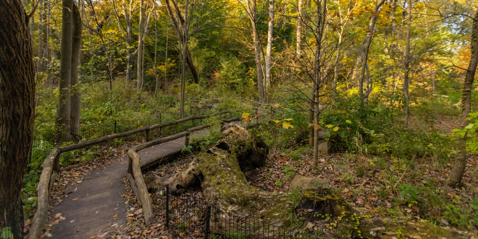 Rustic fencing defines the trail through the Ravine, seen in autumn