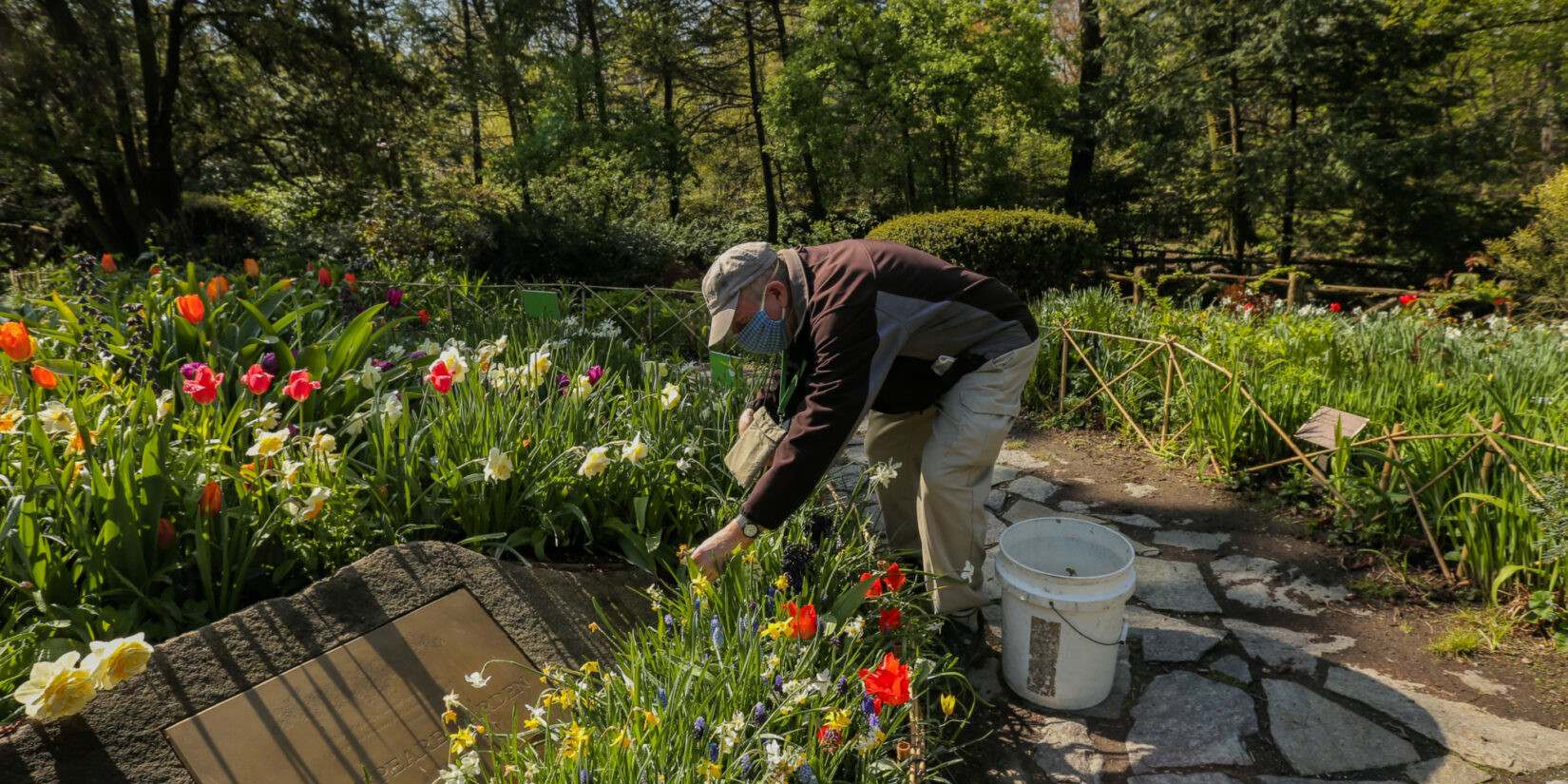 The staff member stoops to tend the blooms in a section of the Shakespeare Garden in spring.