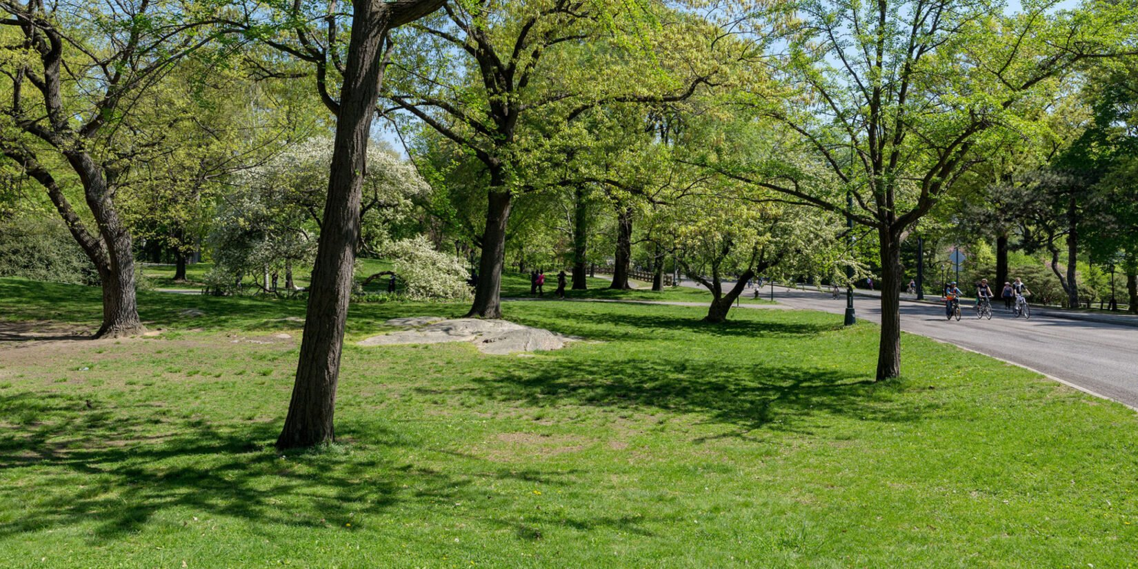 A section of the Seneca Village site, with slender trees widely spaced under a spring sky