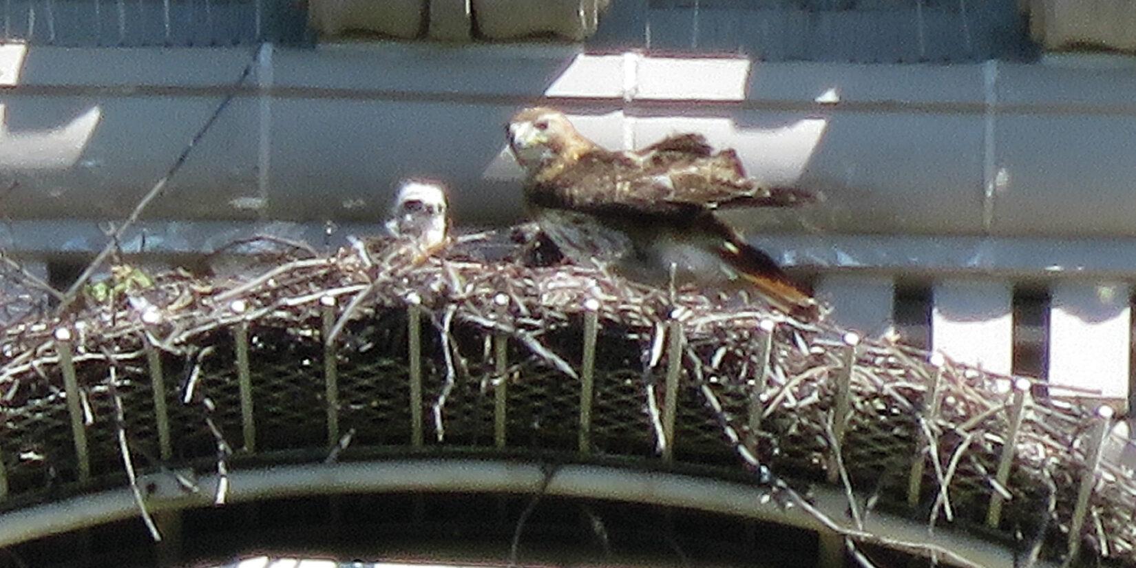 The bird's nest photographed through a powerful telephoto lens.