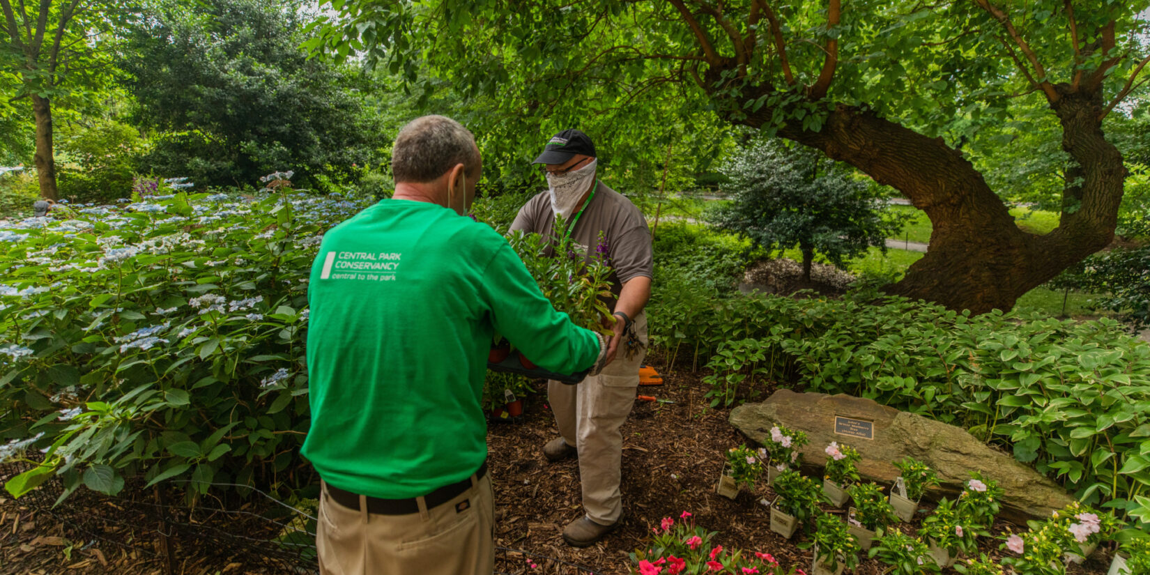 A volunteer and a Conservancy staff member exchange a tray of fresh plantings amidst a rustic landscape.