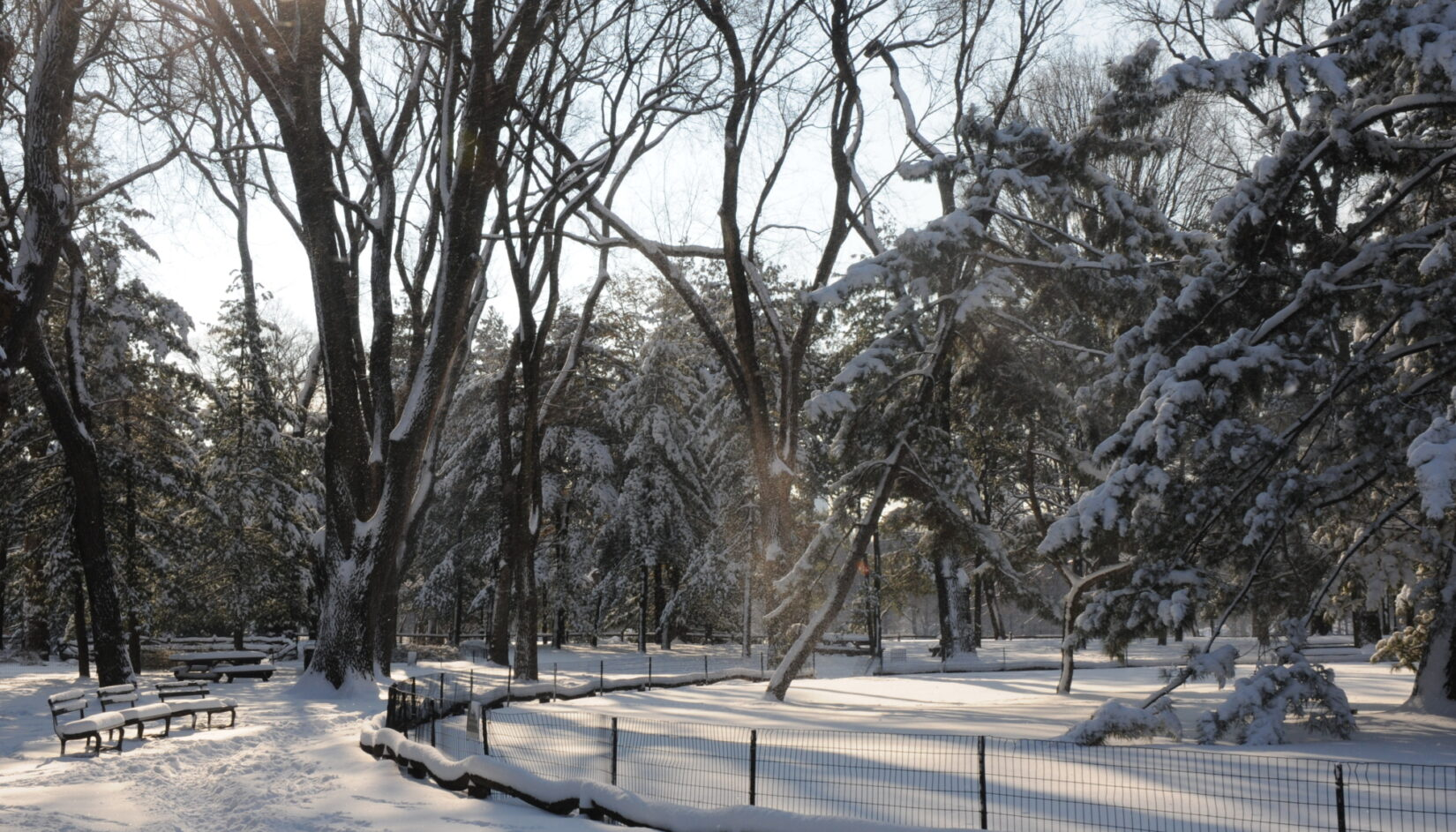 The Arthur Ross Pinetum after a snowstorm
