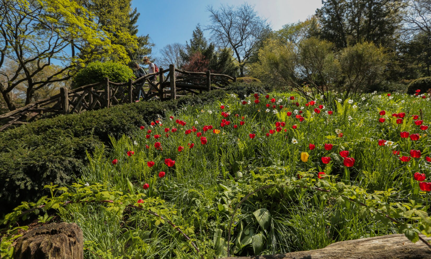 Intricate, natural plantings and rustic features are highlights of the garden.