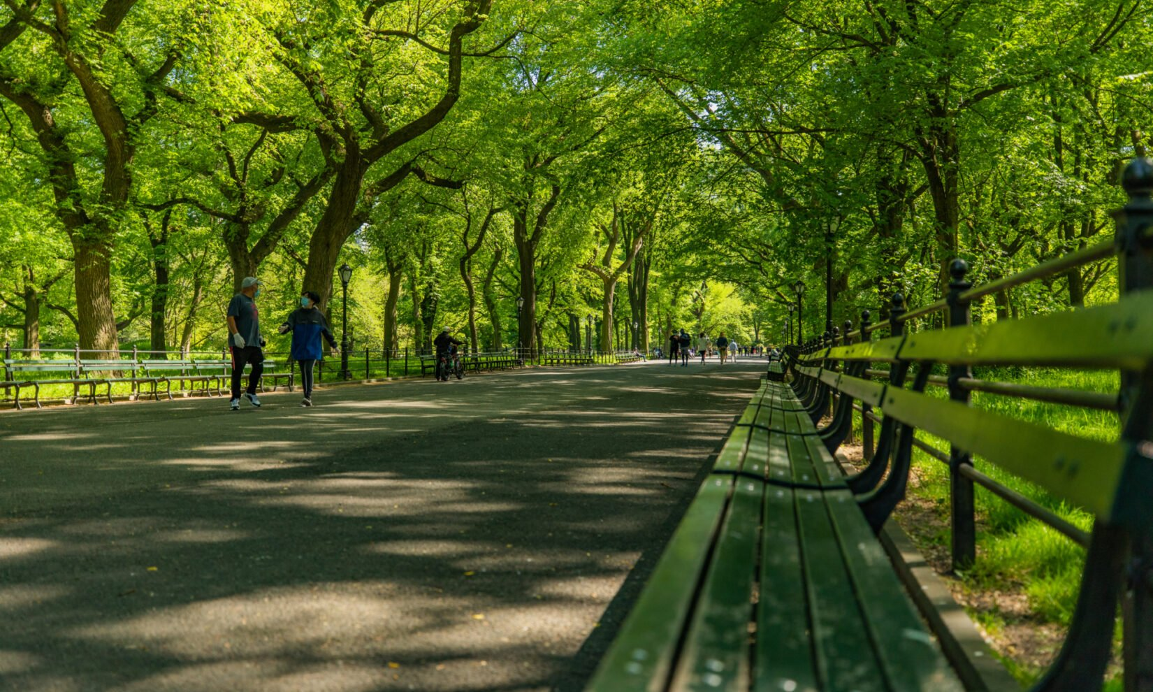 A view from a park bench, looking down the length of the Mall, with trees showing deep green summer leaves