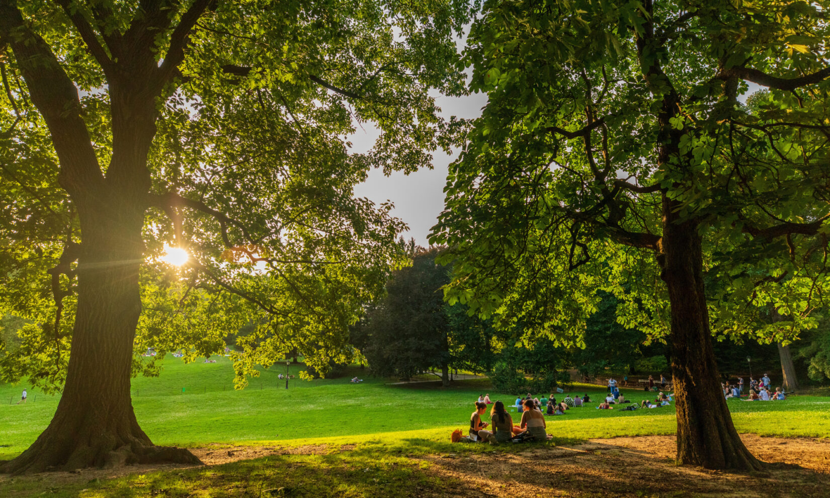 A clutch of parkgoers on a blanket beneath towering trees dramatically lit as the sun sets behind Cedar Hill