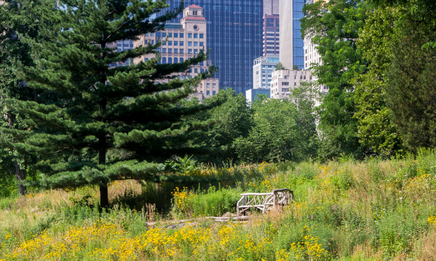 A rustic bench surrounded by Dene Slope, with the New York City skyline in the background