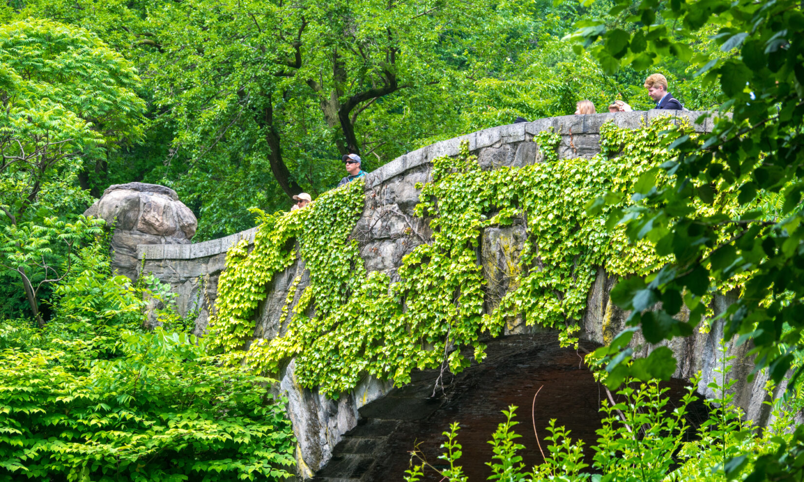 The bridge is camouflaged by ivy and leafy branches.