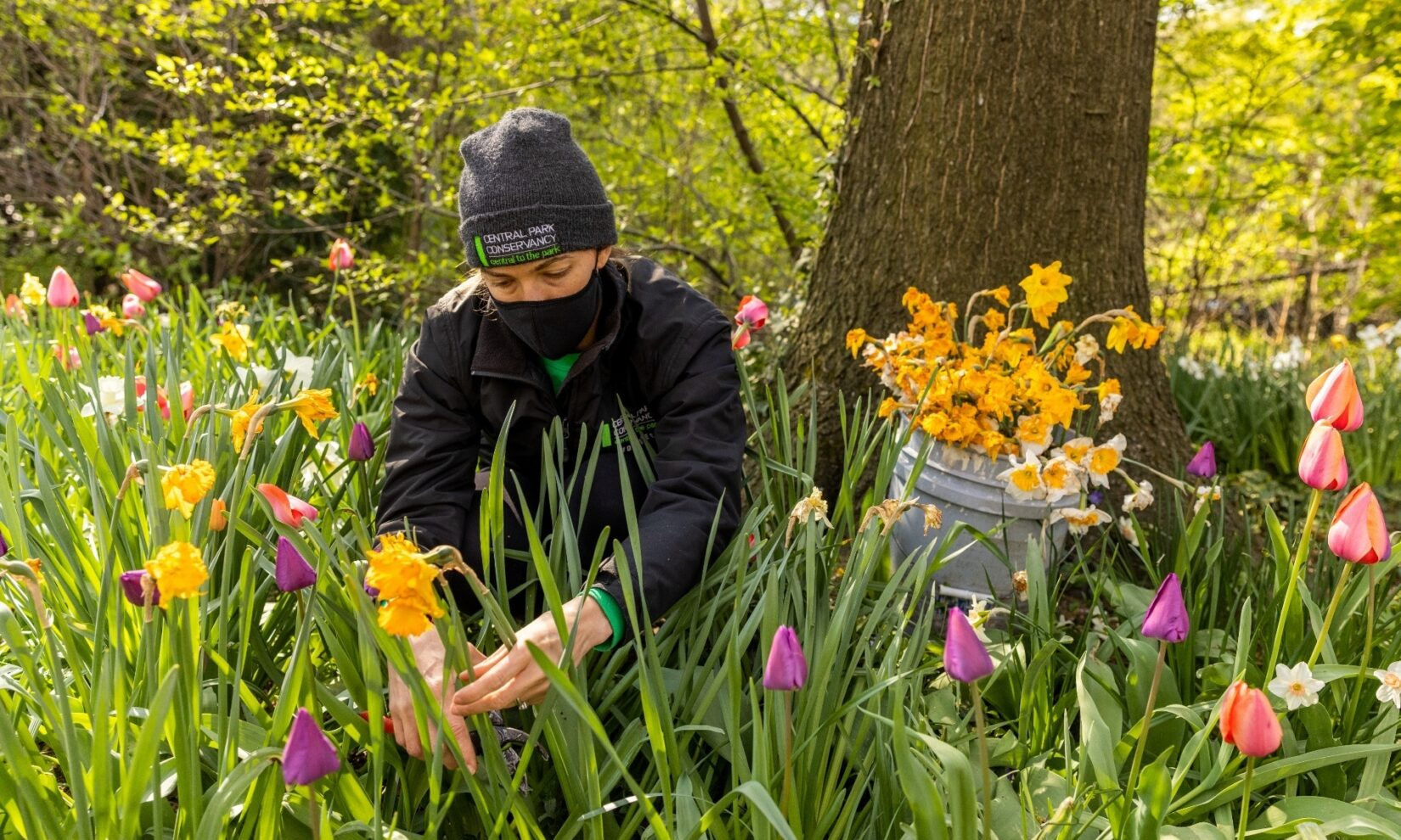 A Conservancy worker tends to a flower garden in Spring