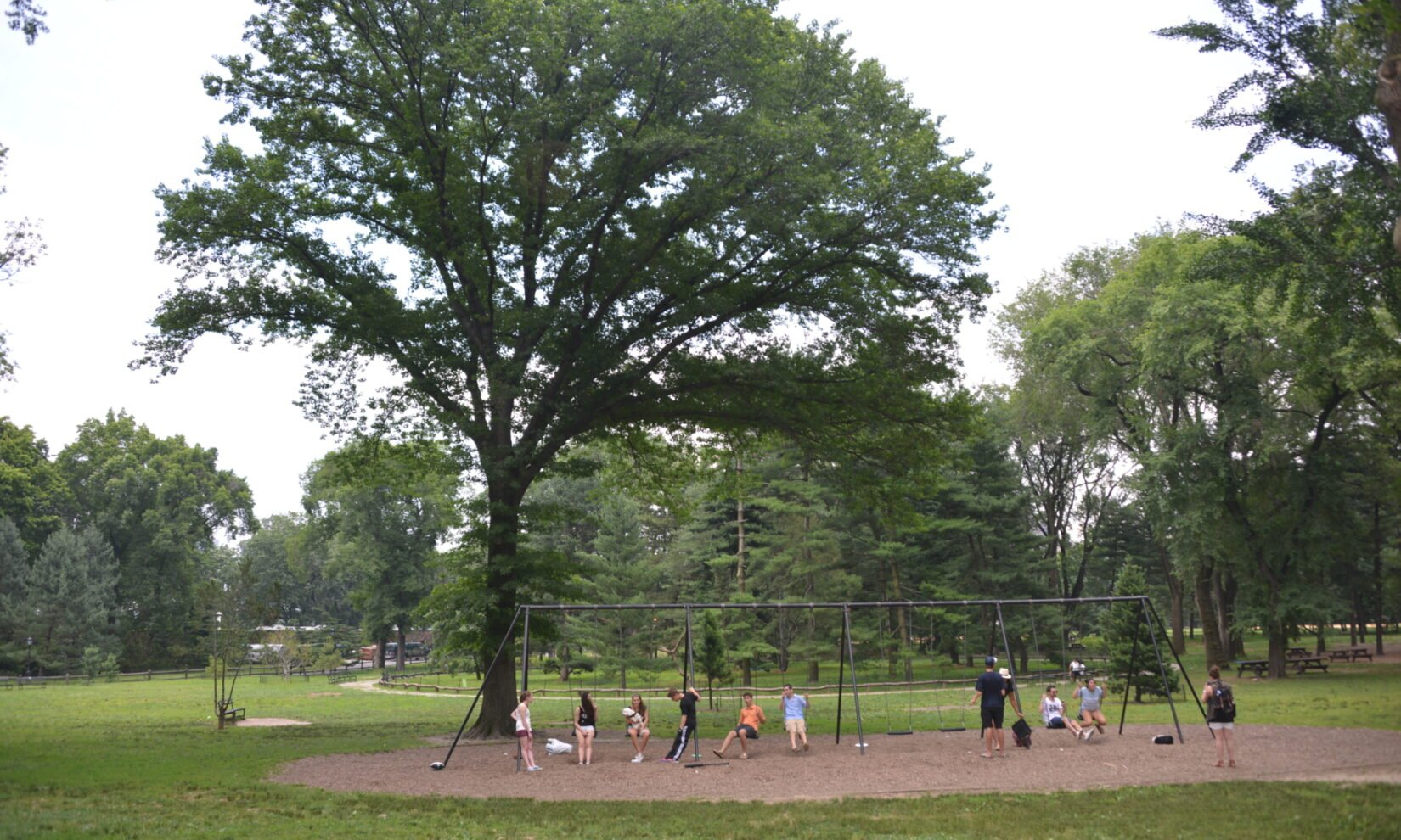 Park visitors enjoy the swings surrounded by the trees of the Pinetum.