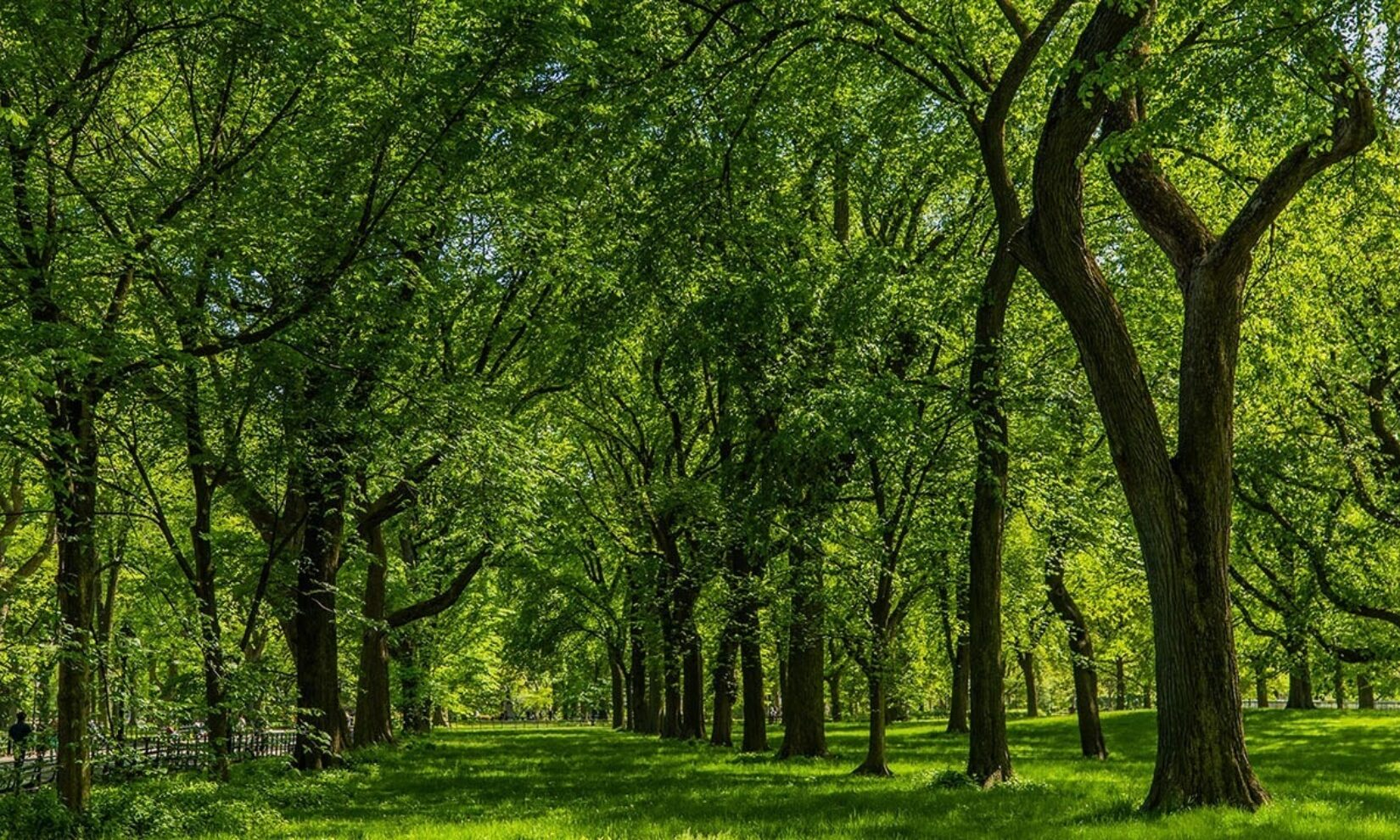 Summer Guide trees