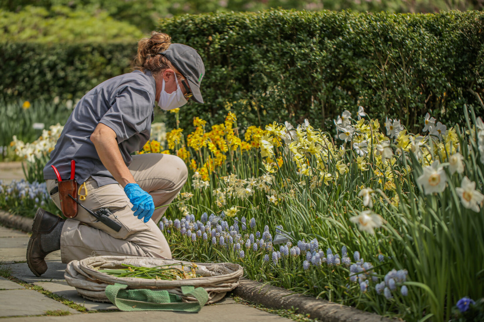 A Conservancy staff member at work on a flower bed