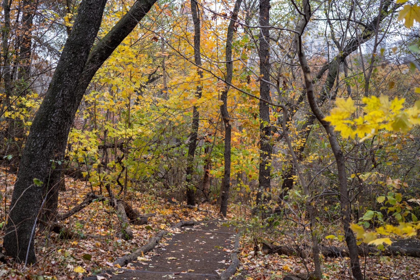 The Hallett Nature Sanctuary shown in mid-autumn