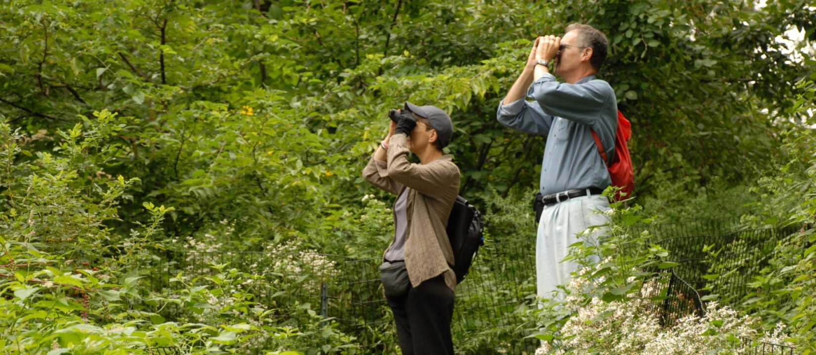 A couple use their binoculars in a woodland setting.