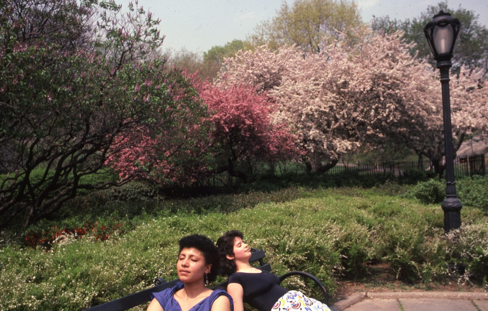 Two young women appear to be napping on a bench in the garden, surrounded by spring blossoms.