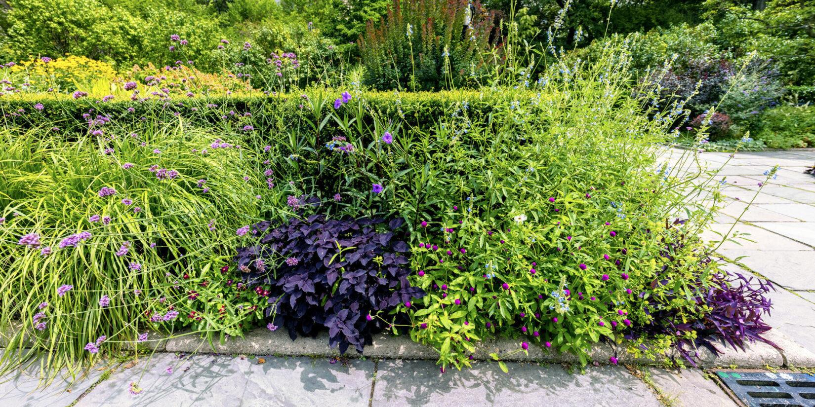 Conservatory Garden 20210728 04