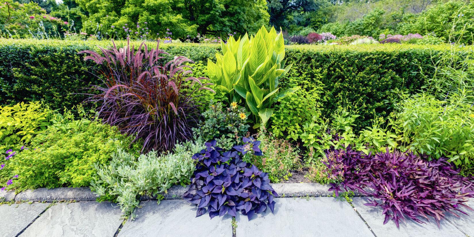 Conservatory Garden 20210728 07