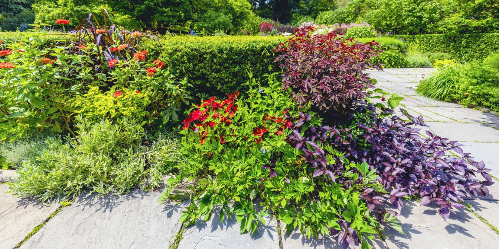 Conservatory Garden 20210728 09