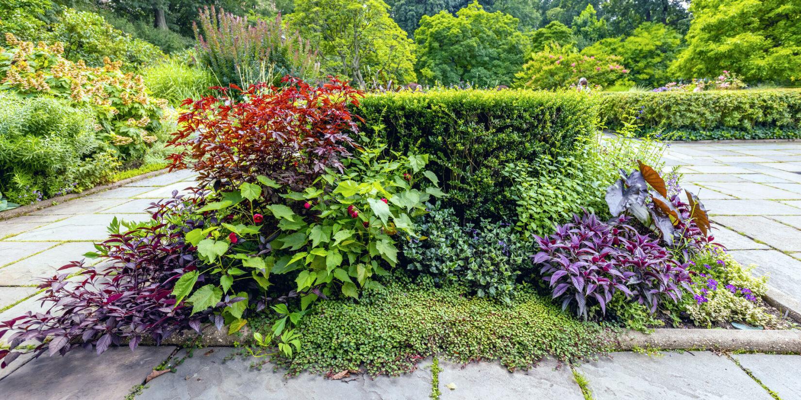 Conservatory Garden 20210728 10