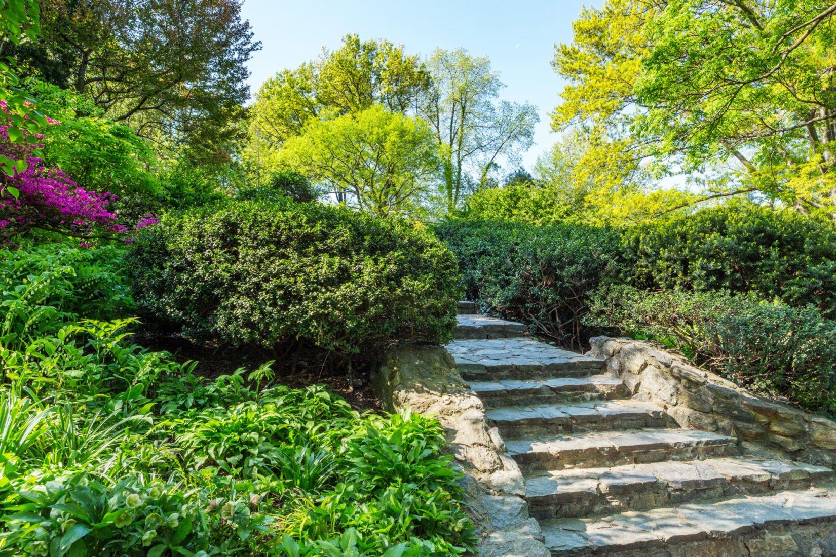 Shakespeare Garden May 2018