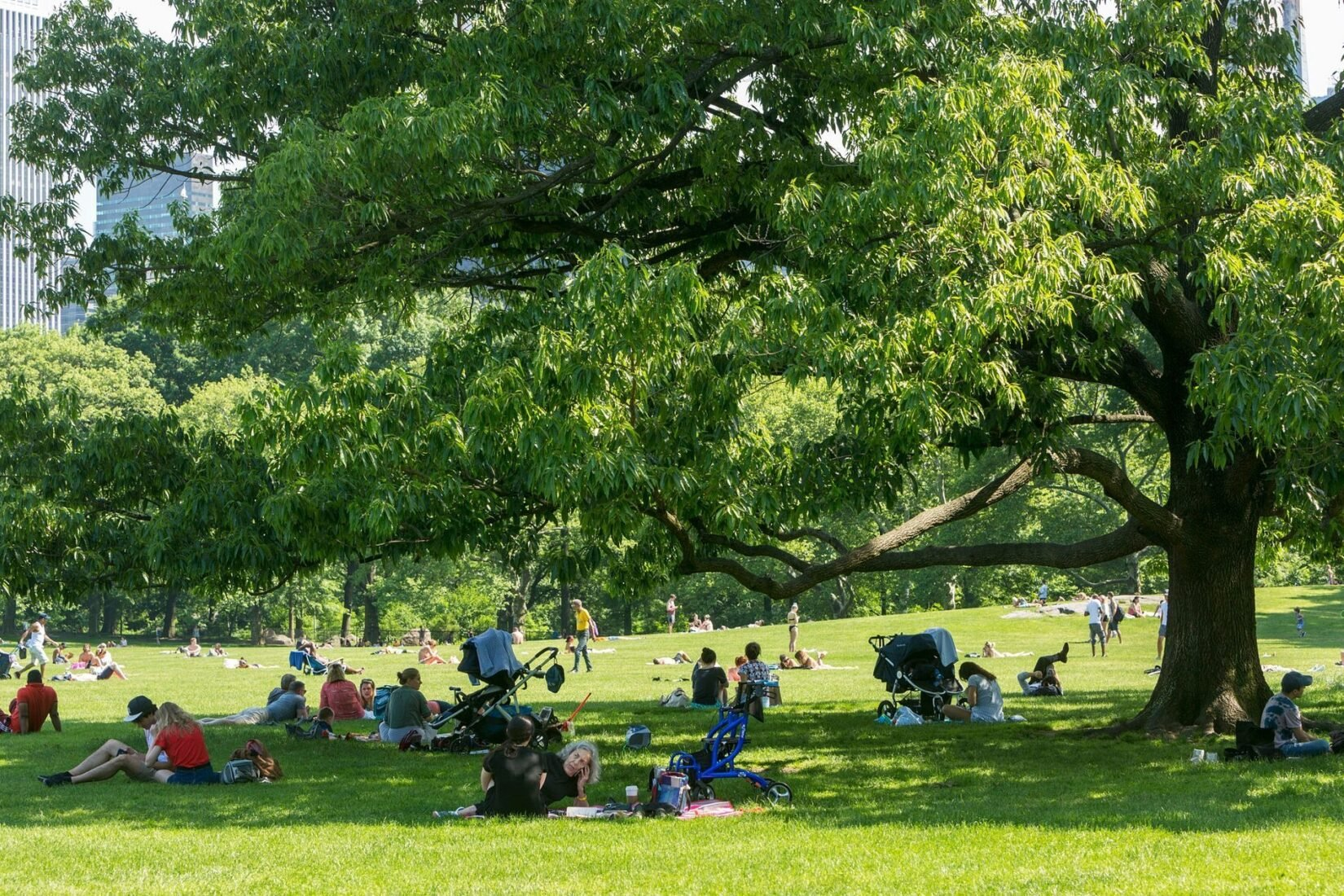 Park-goers enjoy the shade provided by a tree on Sheep Meadow.