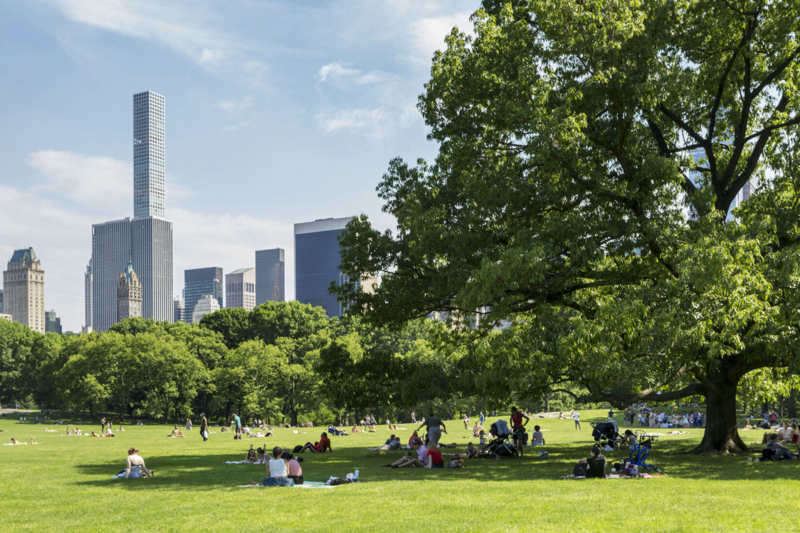 Park visitors find shade beneath a tree in the Sheep Meadow with the skyline in the background