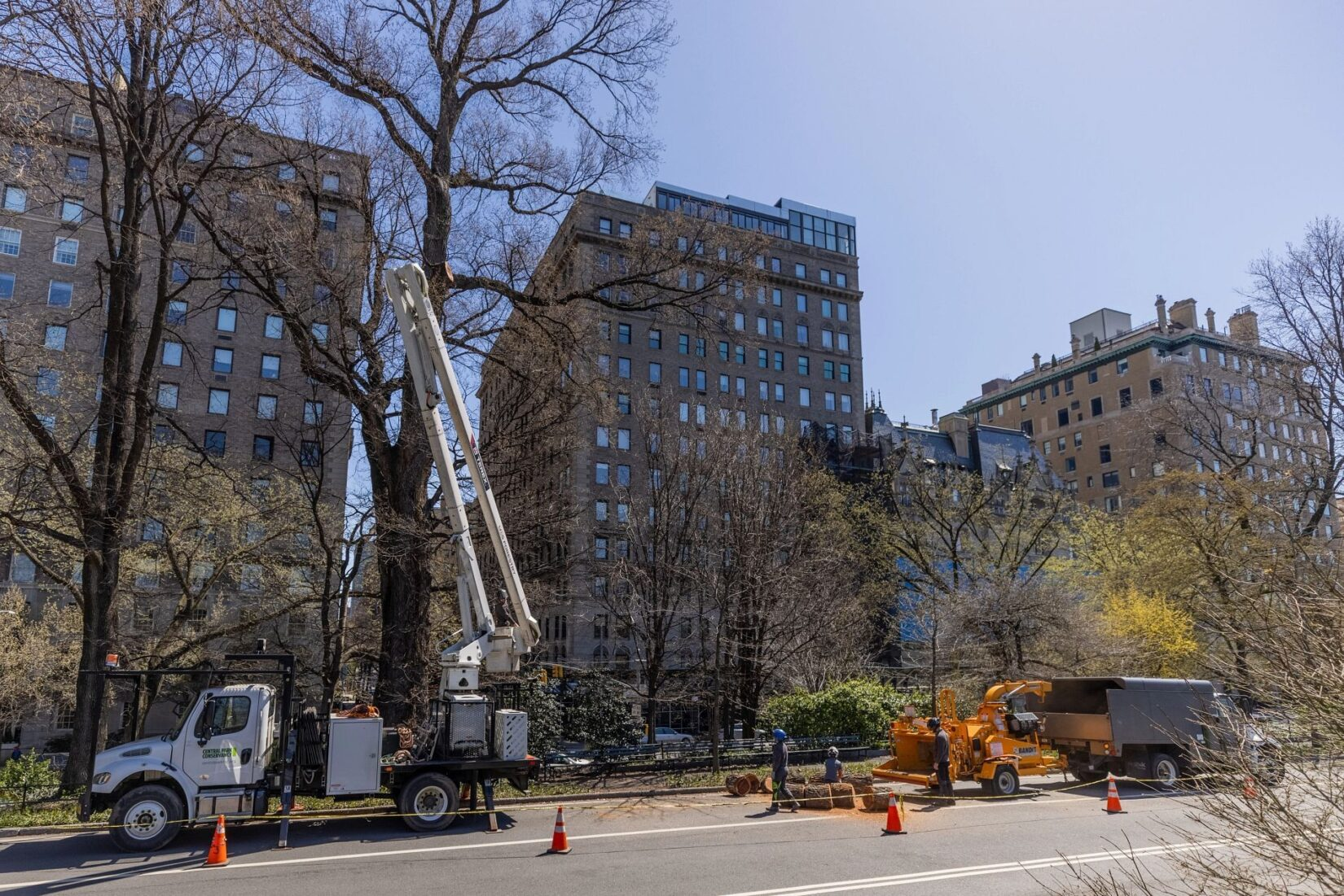 The Conservancy deploying a truck with a cherry picker to care for trees beside a park drive.