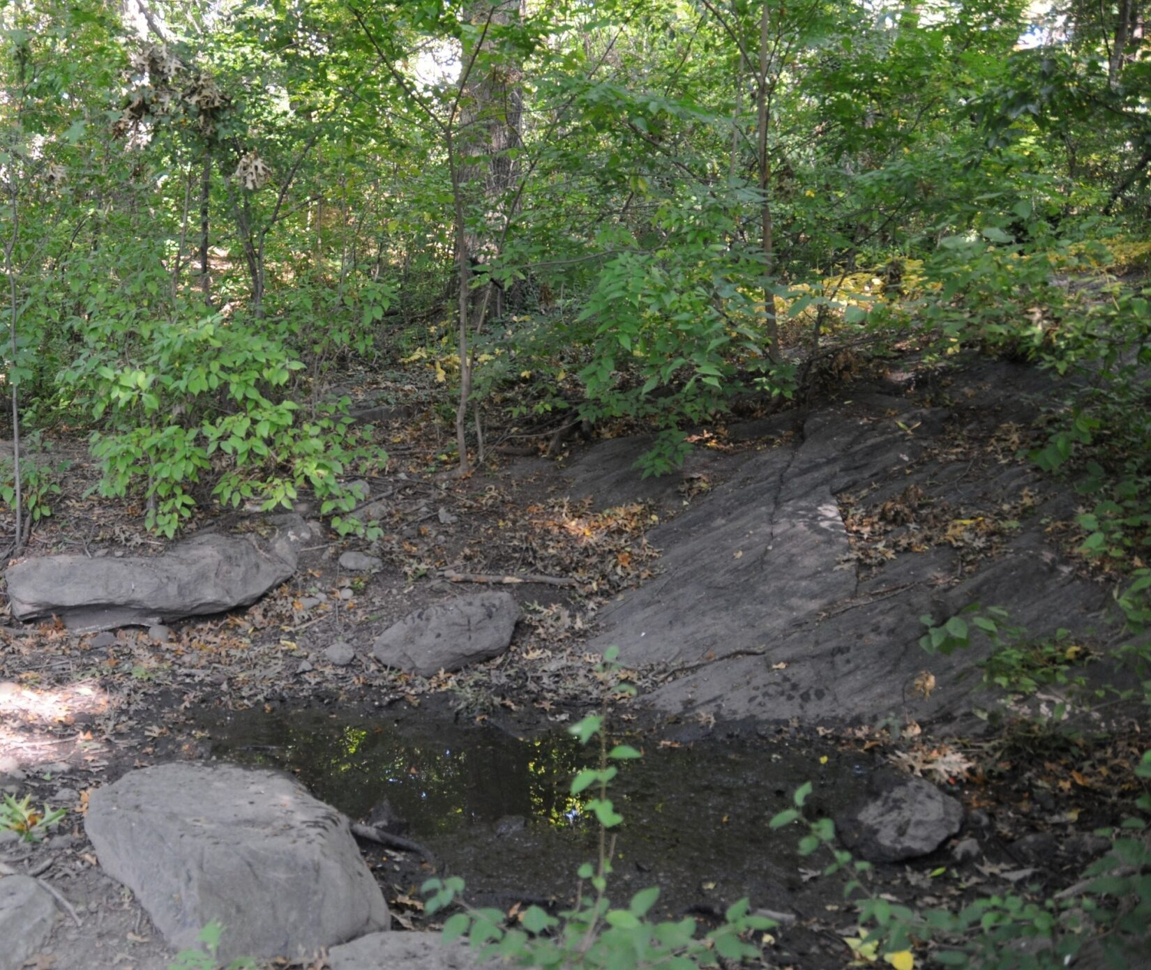 A small pool of water nestled in schist under leafy boughs