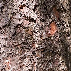 Detail of bark