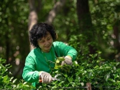 Gardening leading tours