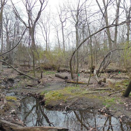 The Loch in need of restoration