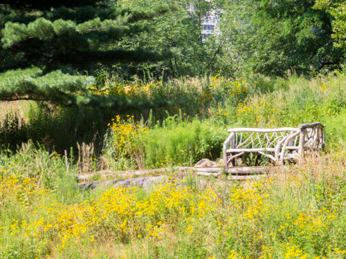 A rustic bench photographed on Dene Slope