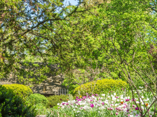Flowers and greenery line the path through Shakespeare Garden