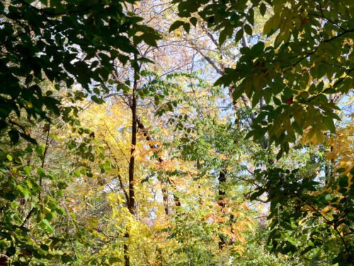 A view looking down a path that emerges from shadows into bright light and fall foliage