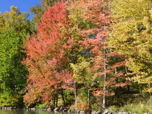 A beautiful shot of red, yellow, and green fall foliage
