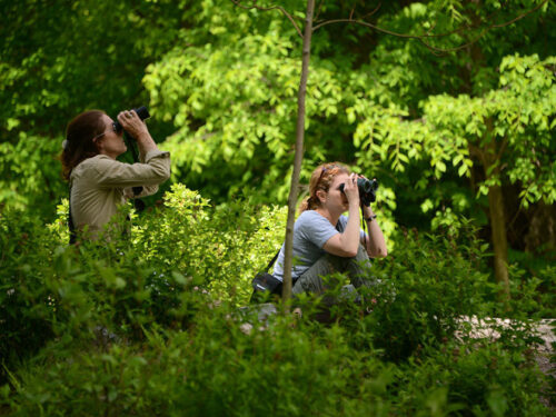 Two birders peer through binoculars in a leafy setting